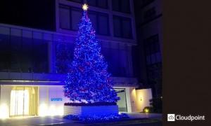 「Aoyama Rising Tree」_03